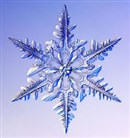 Eirwen - Our Snowflake