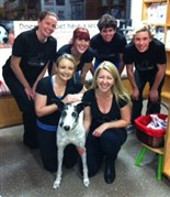 Mosman Vets Running for Greyhounds